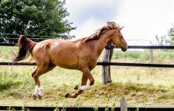 Tierfotografie Pferdefotografie Detlef Koester Dortmund