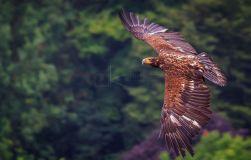 Detlef Koester Fotografie Dortmund Tierfotografie Naturfotografie Adler