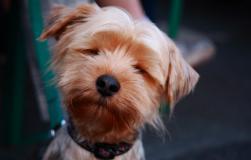 Tierfotografie Hundefotografie Dortmund