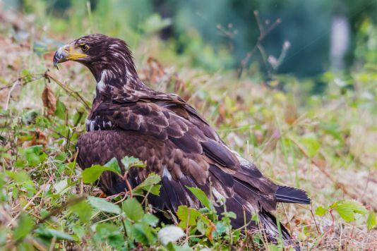 Detlef Koester Fotografie Dortmund Tierfotografie Naturfotografie