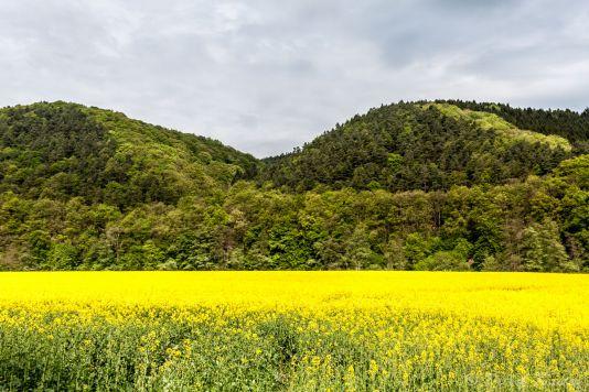 Landschaftsfotografie  Detlef Koester Fotografie Dortmund Rapsfeld Wiedtal