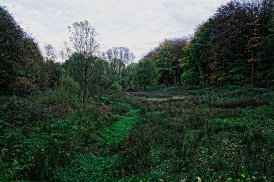 Herbst Rombergpark Foto Detlef Koester Dortmund